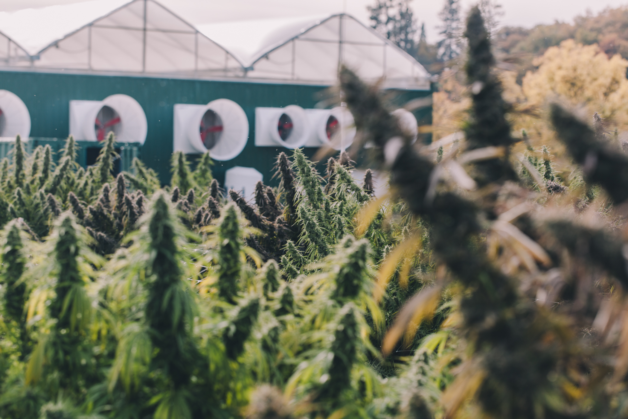 tko reserve cannabis farm